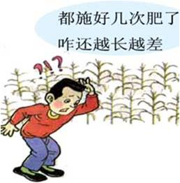 #微补讲坛#走出肥料利用率低的困境