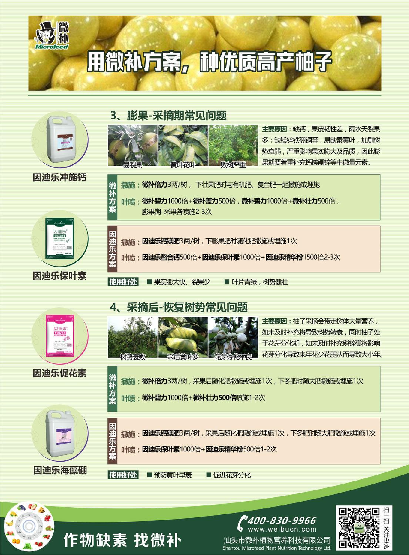 蜜柚A4新2.jpg
