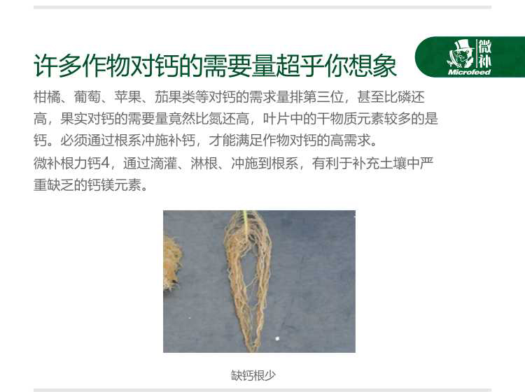 贝斯特全球最奢华网站根力钙4新-电脑_04.jpg