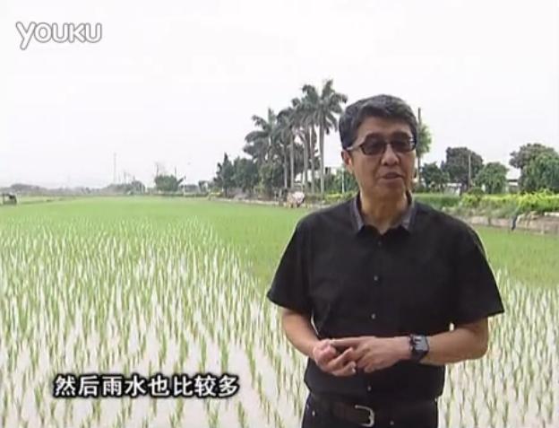 20160530珠江台摇钱树:水稻、甘蔗用微补方案,促根壮长势,提高收益