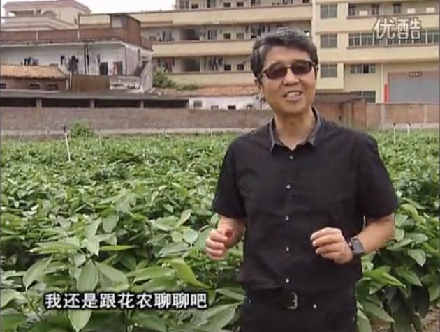 20160606珠江台摇钱树:观叶植物用微补方案,壮根提长、保叶抗病好!