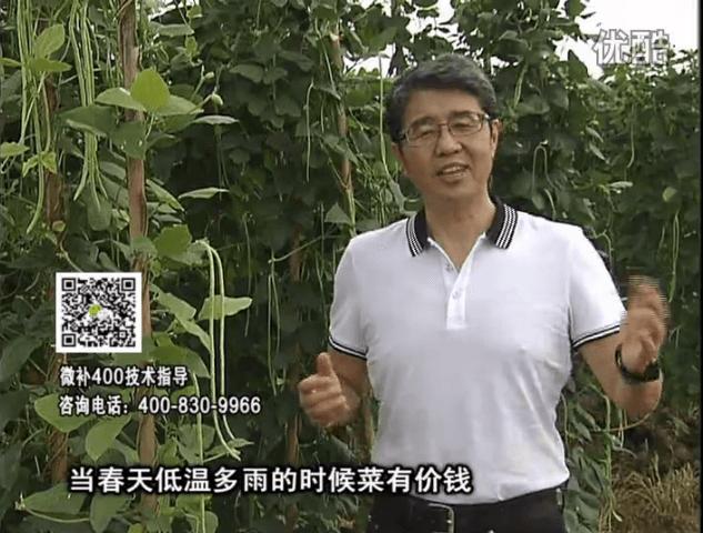 20160704珠江台摇钱树:蔬菜用微补方案,省肥药又保产