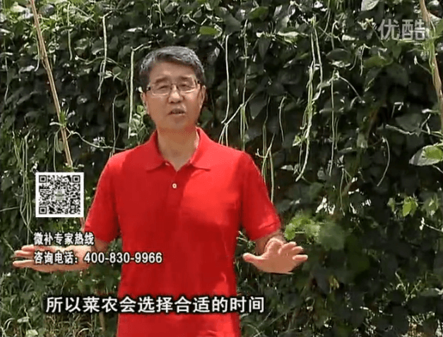 20160718珠江台摇钱树:瓜果蔬菜用微补水肥方案,结果多、有产量