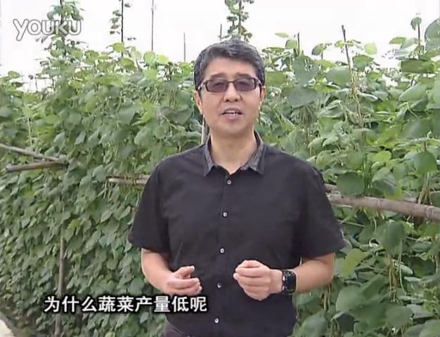 20160502珠江台摇钱树:雨水天多蔬菜沤根没产怎么办?撒微补倍力,喷花力+果力,提高坐果产量