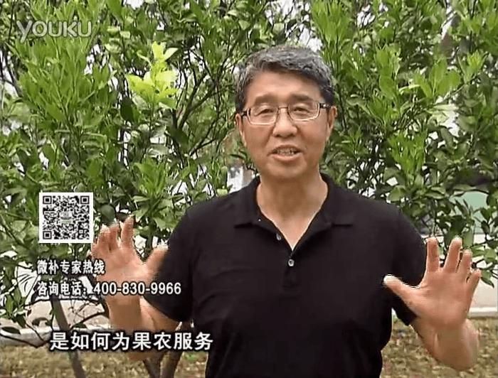 20160912珠江台摇钱树:针对果场面积、缺素营养、设施管理、投入产出,微补做个性化定制服务