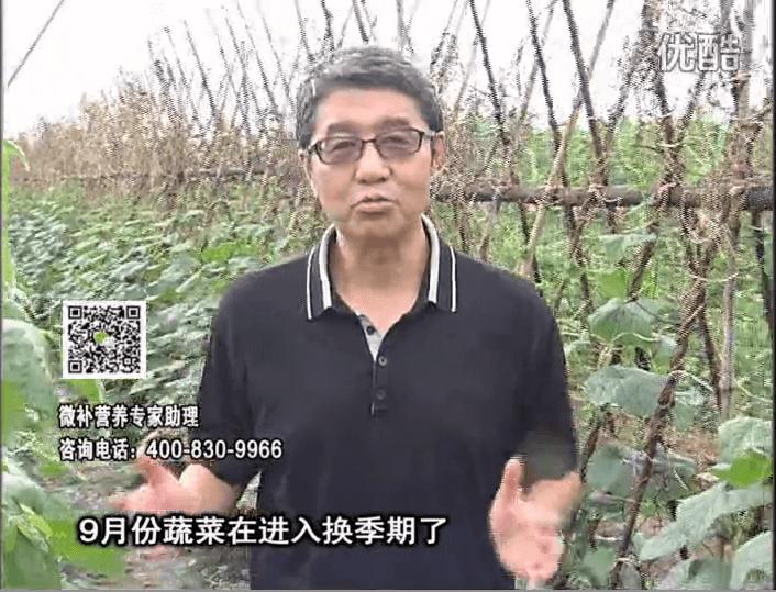 20160926珠江台摇钱树:换季蔬菜淋根力钙精力促根壮长,淋微补调力调酸减少病害
