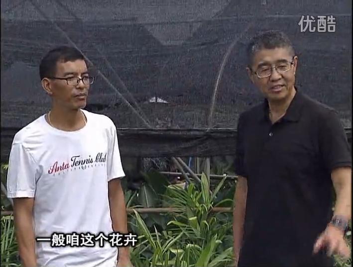 20161010珠江台摇钱树:盆栽花卉促根多,长势青绿