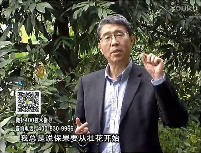 珠江台摇钱树:荔枝来花少更要做好壮花,提高坐果,叶喷微补花力+硼力,补锌