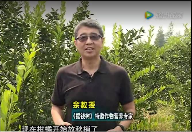 20170821珠江台摇钱树:柑橘如何放秋梢?