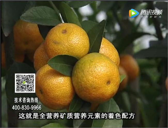 20171120珠江台摇钱树:柑橘如何提高品质卖价