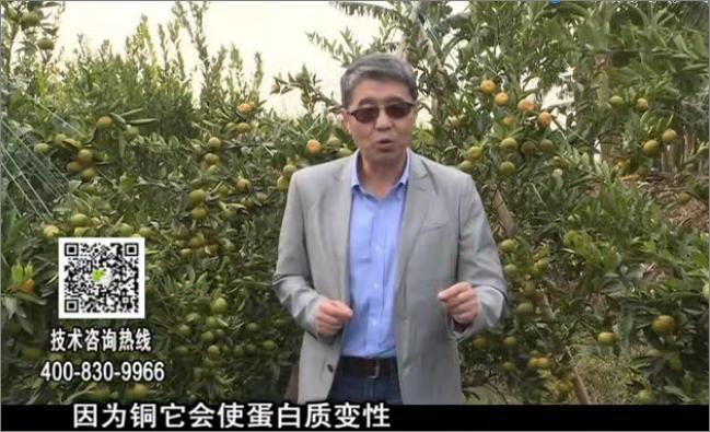 20171218珠江台摇钱树:有机铜提高作物抗病力
