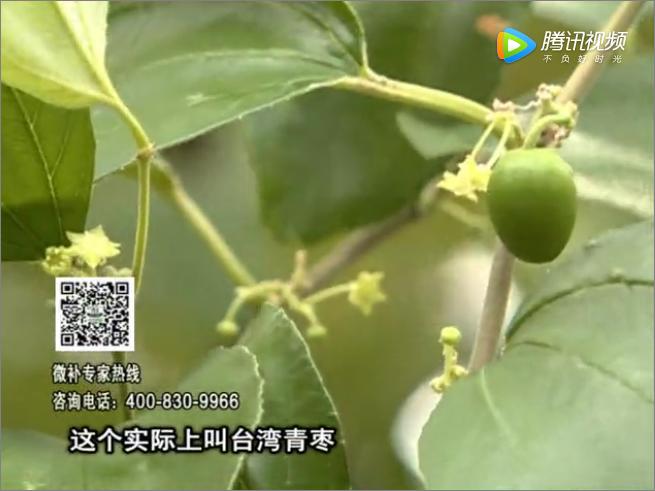 20171106珠江台摇钱树:青枣果大清甜如何种?