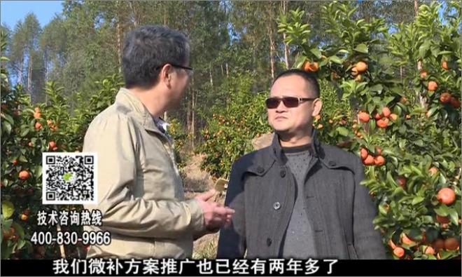 20180122珠江台摇钱树:广西柑橘如何管?产量卖相好?