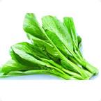 叶菜类营养方案