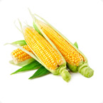 玉米营养方案